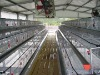 steel prefabricated poultry house