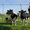 Factory offered Grassland fence