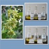 Assay by HPLC: purity 98% min.-Shikimic Acid