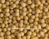 soy beans,soybeans, soyabean,soja,non gmo soybean