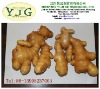 competitive price 2012 new crops old ginger wholesales
