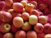 Export Fresh Red Delicious Apple Fruit