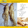 Natural Ginseng Extract from GMP Manufacturer