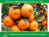 Fresh Lokam Mandarin Orange