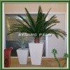 2.5m preserved date palm tree with lighted pot
