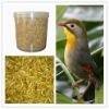 High protein bird feed dried mealworm in tub