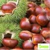 100% Natural Organic Chestnut Powder