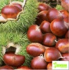 100% Natural Organic Chestnut Powder