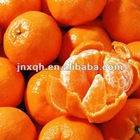 fresh chinese honey mandarin orange