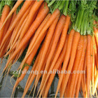 Freeze Carrot From Origin-Competitive Price