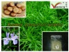Oil Soluble Rosemary Extract
