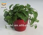 flower pot,garden pot,planters coated with paint