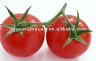 fresh tomatoes export 2012