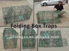 Folding box traps
