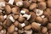 dried palnt edible shiitake mushroom agaric