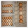 new type egg tray production line 0086 15238020875