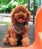 2012 New Arrive,Pet Clothes,Pet Clothing,Dog accessories