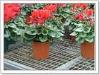 Plant flowers net