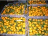 Nanfeng mandarin Orange