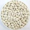 Japan white kidney bean