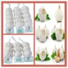 2012 new crop pure white fresh garlic best price