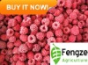 IQF Palmleaf Raspberry Fruit good quality and competitive price ISO and HACCP certificate ANUGA FAIR attending