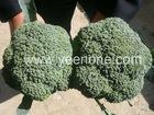 Fresh Vegetables Broccoli