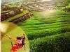 farm tiller/Small power tiller from china