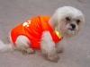 safety pet vest