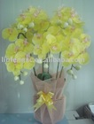 artificial flower,moth orchid