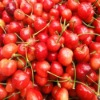 Chinese red cherry