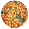Nenfeng honey orange