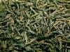 Junshanyinzhen yellow tea, silver needle tea