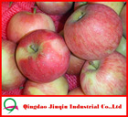 JQ Wholesale Prices Apple Fruit