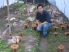 reishi mushroom extract,lentinus edodes extract planting base