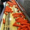 vegetable of fresh carrot