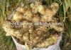 Export 2012 fresh chinese fresh sweet potato