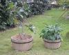 HL008E/F Wooden planter