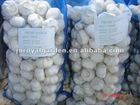New crop Jinxiang fresh garlic