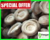 Frozen shiitake(whole)