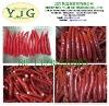 Chinese new crops fresh chili