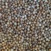 coriander seeds (new crop)