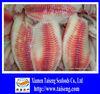 Frozen Tilapia Fish 5-7 OZ Tilapia Fillet